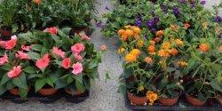 marche-aux-fleurs-agen-2014-660x330