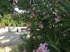 fleurs_4